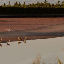 朝は海鳥の楽園