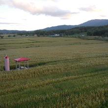 一面のそば畑