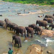 とても大きな象の動物園