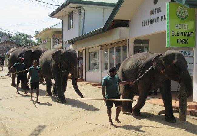 楽しそうに水浴びする象たち