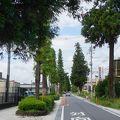 写真:原市杉並木