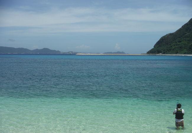 定住している海亀がいるビーチ
