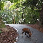 鹿や猿に会えました