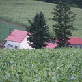 写真:赤い屋根のある丘