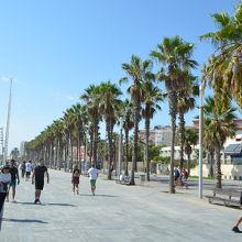 浜辺の並木道