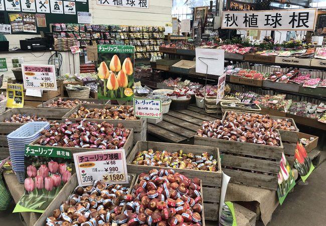 GREENFARM (金沢本店)