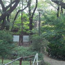 箱根山の登り口と箱根山の全体像です。標高差は、約45mです。