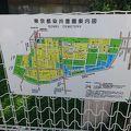 写真:染井霊園