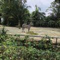 動物達を間近で見られます。