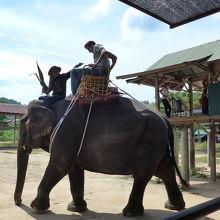 象乗り場の風景