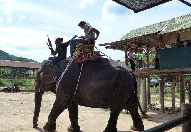 生れて初めて象に乗りました。昨日のトラに続いて初体験のプーケット島です!!