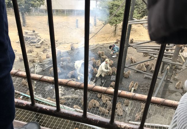 日本モンキーセンター附属博物館 世界サル類動物園