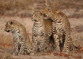 サビ サンド私営動物保護区