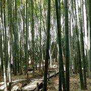 竹の庭・竹林が見事です