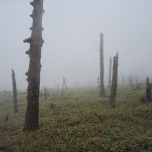 幻想的な昔は樹林帯