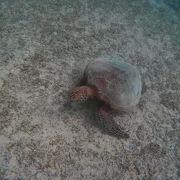 ウミガメのスポット