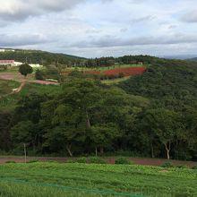 広大な敷地、遠くに赤く見えるのが多分サルビアです