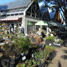 地元の植木の販売などは充実している。