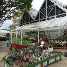 お土産店の外には多種多様の花々が展示販売されてました。
