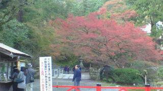 坂本駅近く、紅葉も見ごたえがある総本宮です