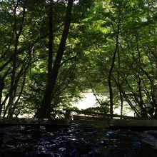 静かな林の中、木々に囲まれて温泉に浸かれる