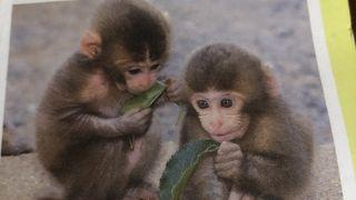 外国人とお猿