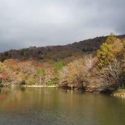 愛知県で最速の紅葉