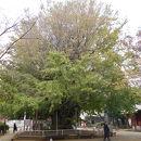 海上山 千葉寺