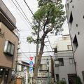 写真:鞍掛の松