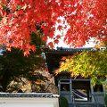 11月6日訪問 綺麗な紅葉