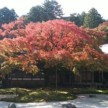 樹齢400年以上