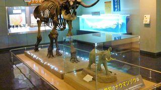 横須賀市自然 人文博物館
