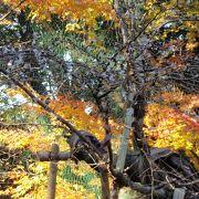 西明寺(湖東)に紅葉を見に行きました
