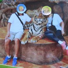 大きな虎にハグ!