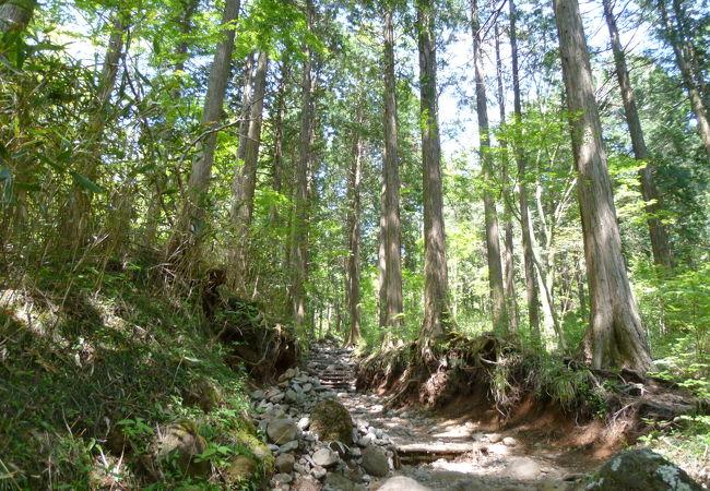 金時山コース