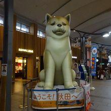 巨大な秋田犬が近くにいます