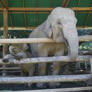 のびのび暮らす象さんに癒しをもらう