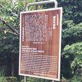写真:細井平洲墓