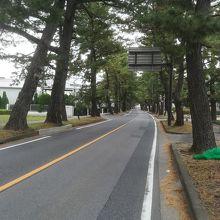 東海道松並木