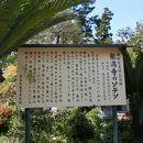 能満寺の大ソテツ