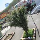 海老名中央公園