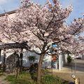 写真:静桜