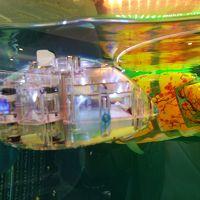 ロビーには機械で泳ぐ魚
