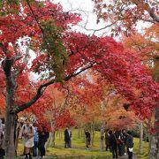 紅葉の美しい庭園です