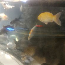 無料の水族館