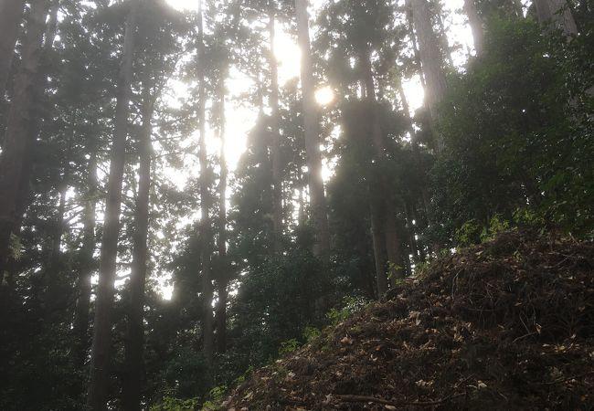大山の千本杉