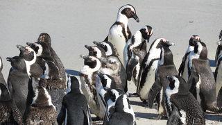 思ったより沢山のペンギンに会えました。