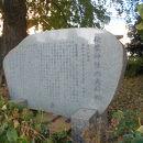 秋葉神社の夫婦松
