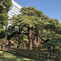 写真:浜離宮恩賜庭園 三百年の松