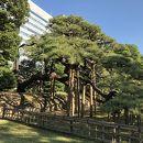 浜離宮恩賜庭園 三百年の松